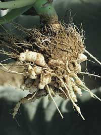 landwirtschaftskammer nrw pflanzenschutz