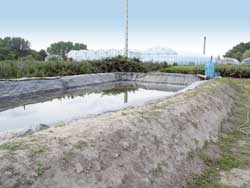 Zakwaszanie wody do podlewania borówki